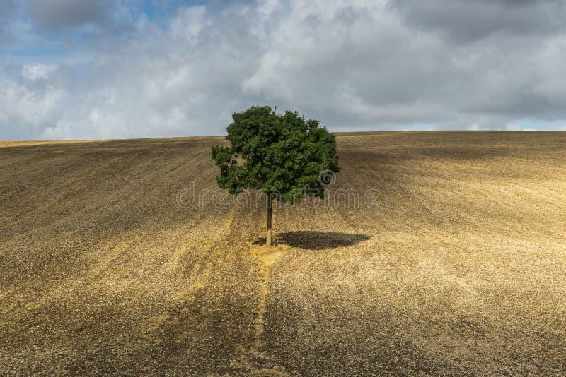 与阴影法国的偏僻的树 库存照片