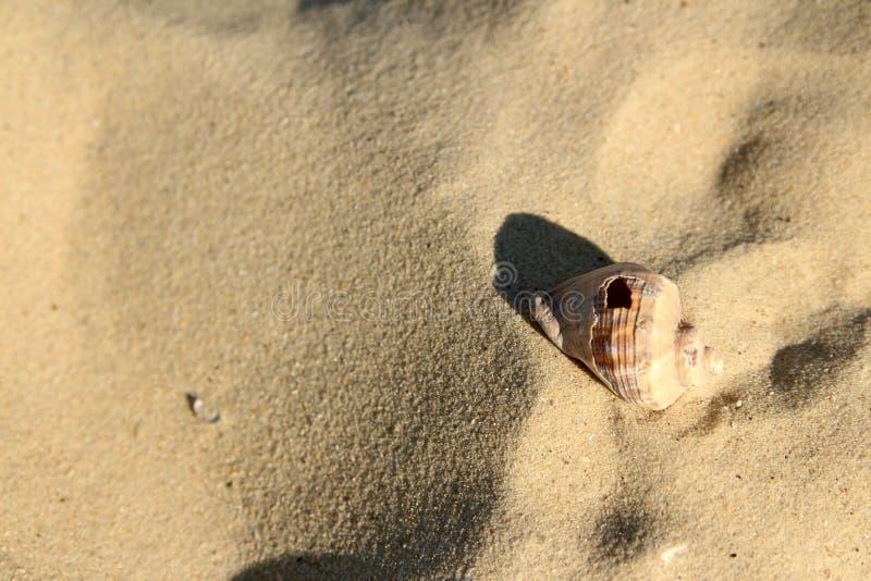 与阴影的有穴的壳在沙子 免版税库存照片