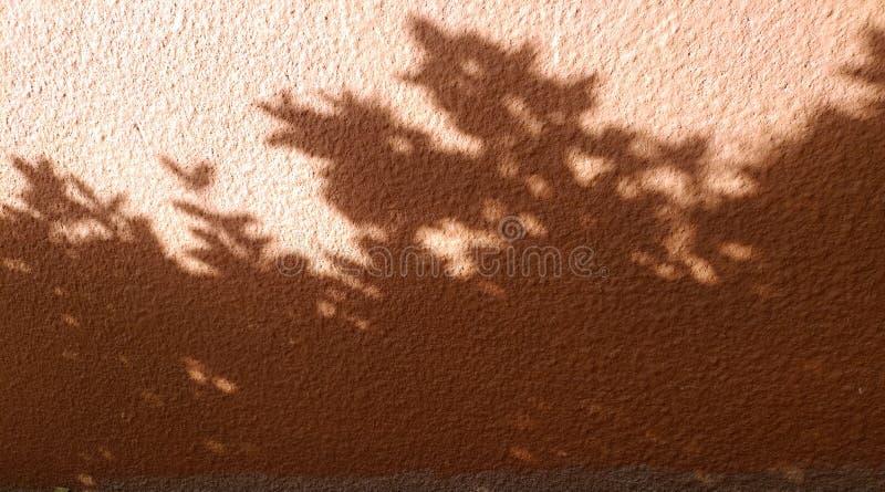 与阴影的有趣的抽象背景从叶子和在墙壁上的窗口格子 库存图片