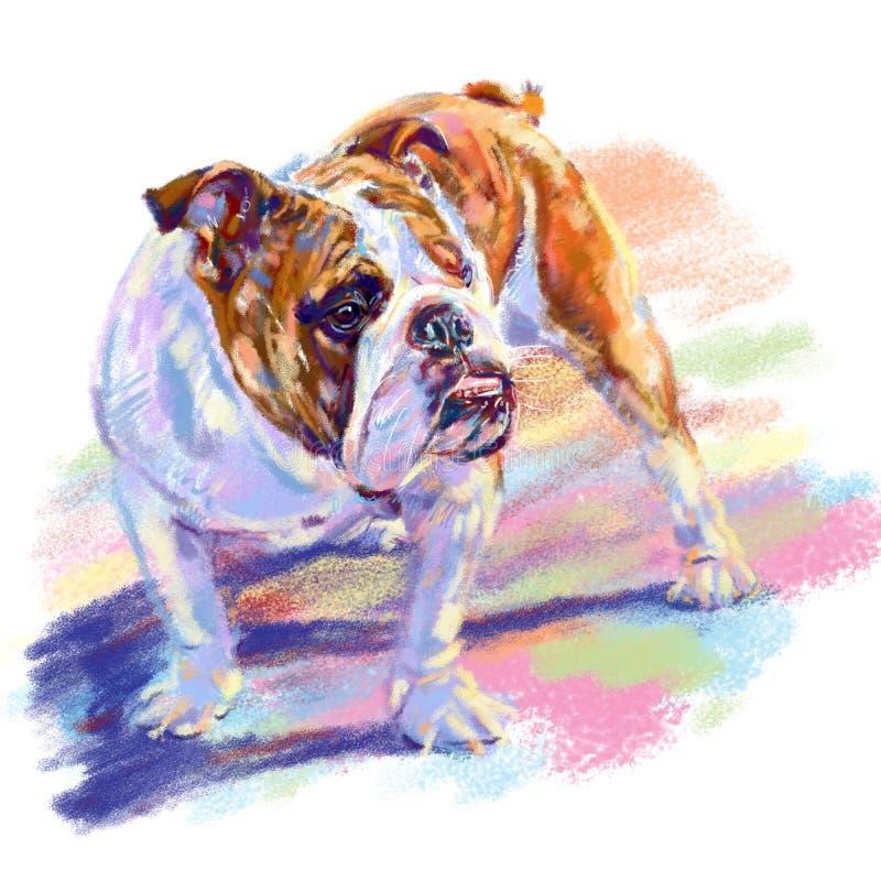与阴影的牛头犬在白色背景,数字绘画 库存例证