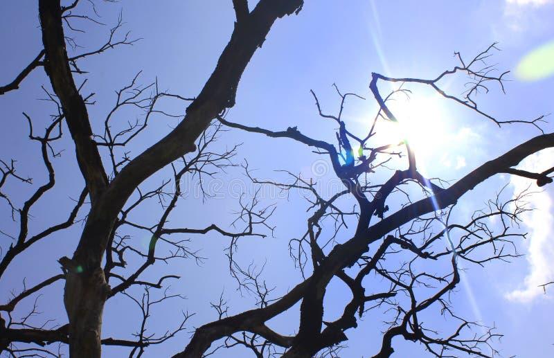 与阴沉的死的树枝的太阳光芒 免版税库存照片