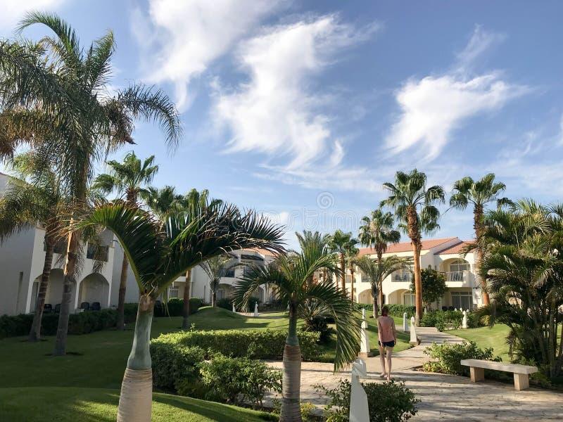 与阿拉伯回教白色石大厦,村庄,棕榈树wi热带绿色背景的房子的美好的风景  库存图片
