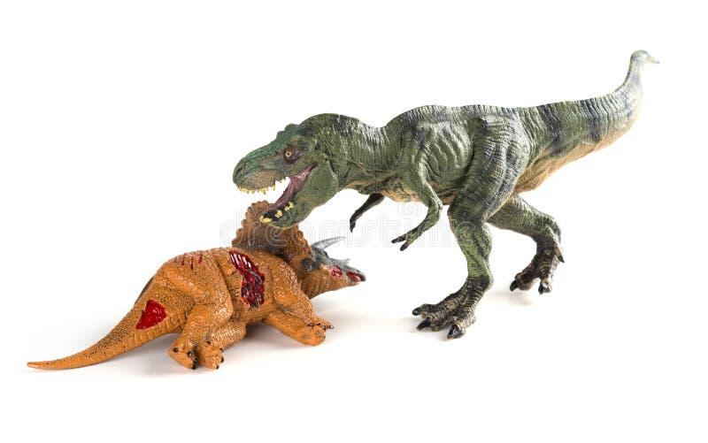与附近三角恐龙身体的暴龙在白色 库存照片