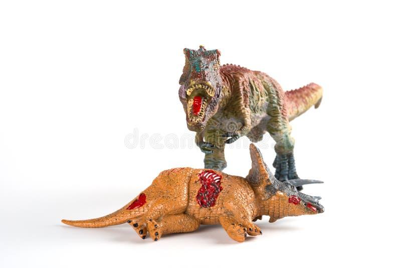 与附近三角恐龙身体的正面图暴龙在白色 图库摄影
