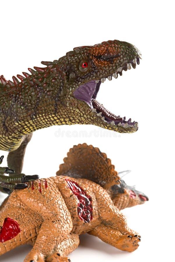与附近三角恐龙身体的鲨齿龙在白色背景关闭 免版税库存图片
