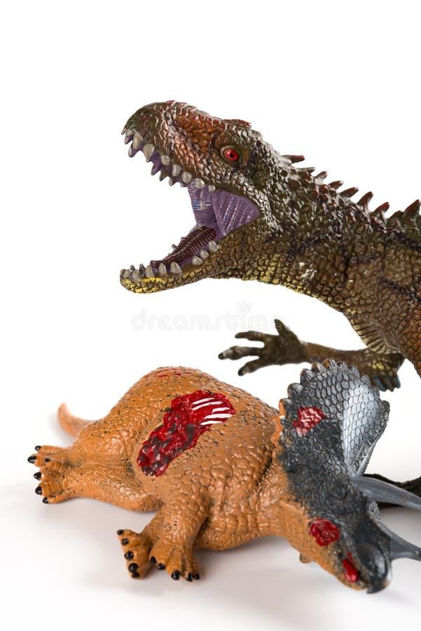与附近三角恐龙身体的鲨齿龙在白色背景关闭 库存照片
