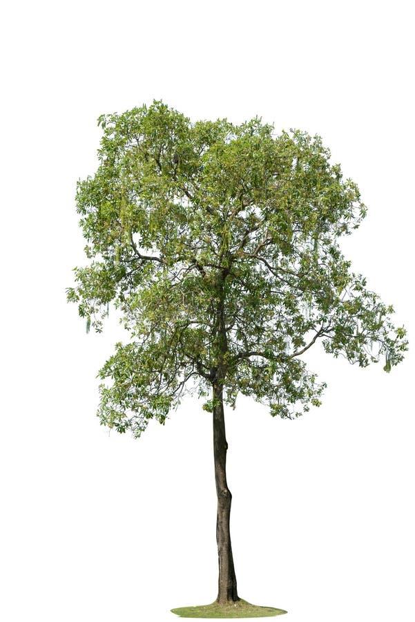 与隔绝的树,装饰的树 库存照片