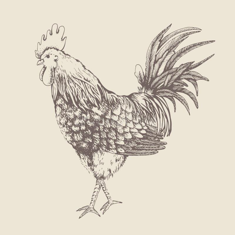 与雄鸡的葡萄酒设计 皇族释放例证