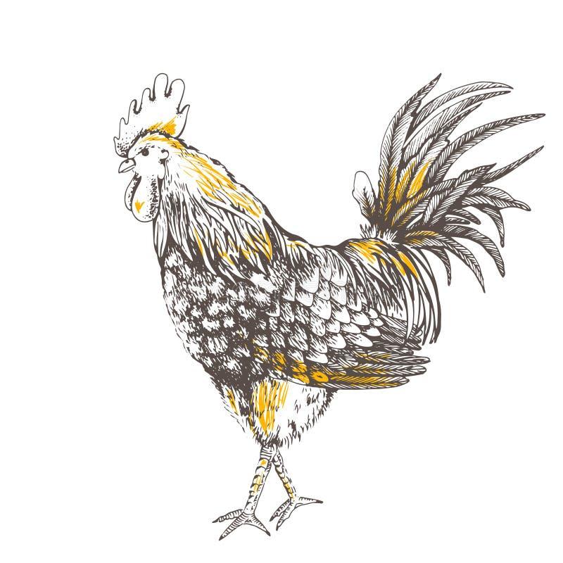 与雄鸡的葡萄酒设计 向量例证
