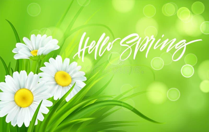 与雏菊和新鲜的绿草的春天背景 你好春天手写字法 也corel凹道例证向量 向量例证