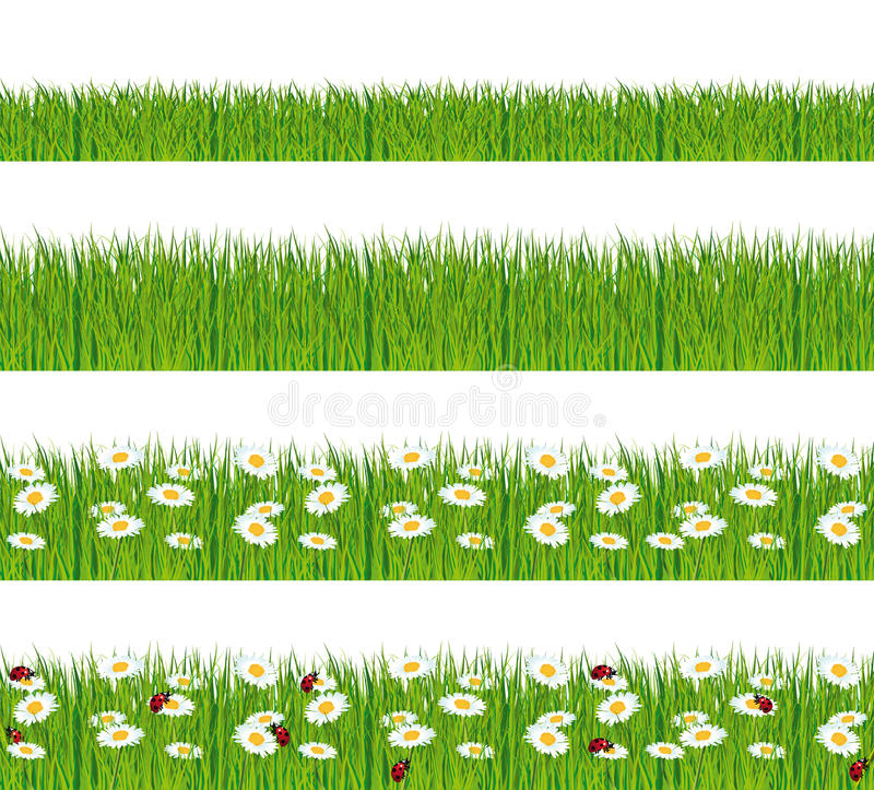与雏菊和瓢虫的绿草。 皇族释放例证