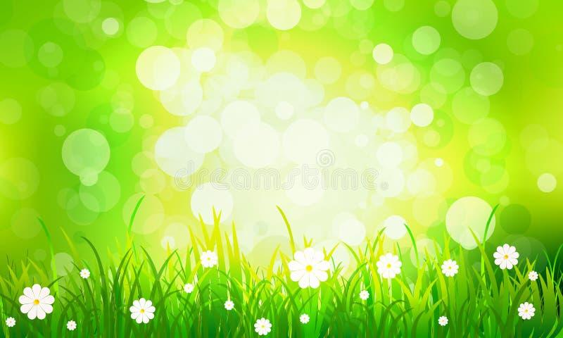 与雏菊的草在绿色bokeh背景 向量例证