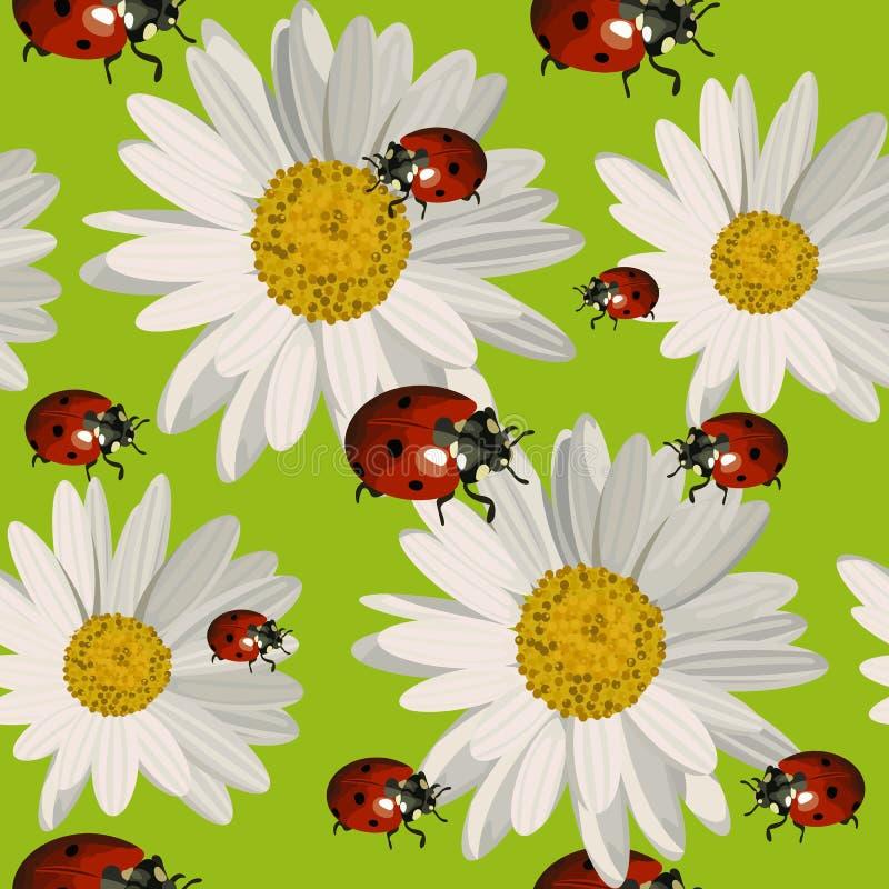 与雏菊花和瓢虫的无缝的样式 向量例证