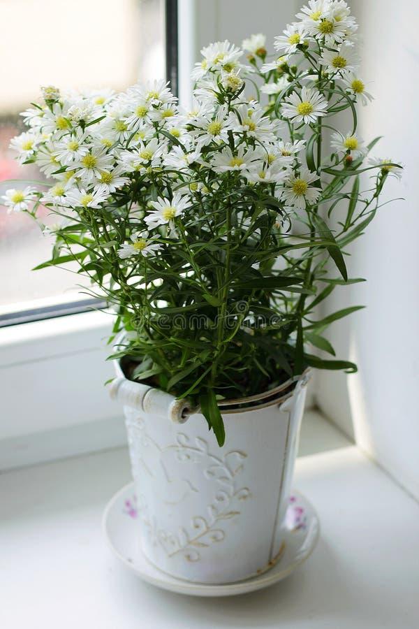 与雏菊花的春天美好的图片 库存照片
