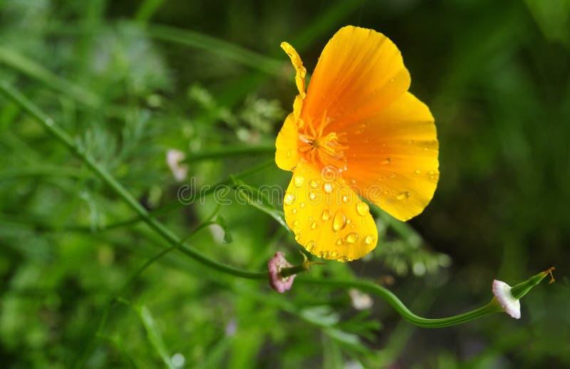 与雨下落的加利福尼亚阳光 免版税图库摄影