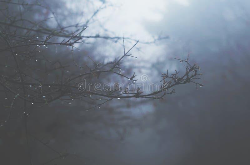 与雨下落的树枝在有薄雾的森林 库存图片