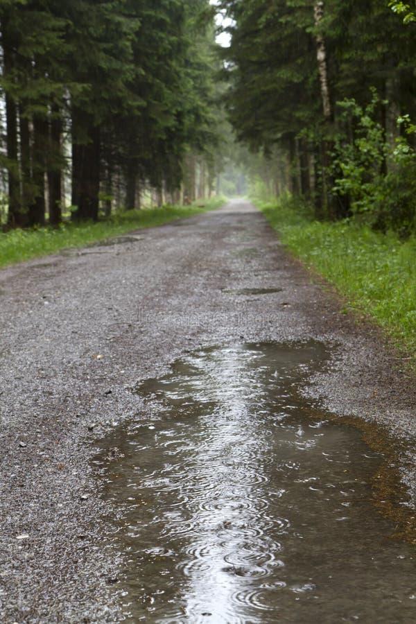 与雨水水坑的森林公路  库存照片