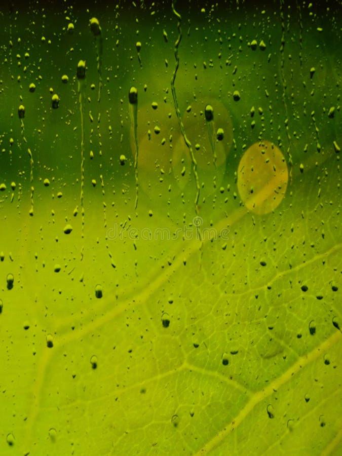 与雨珠作用的绿色叶子背景 与叶子静脉和雨珠的美丽的绿色墙纸 自然特写镜头视图 库存照片