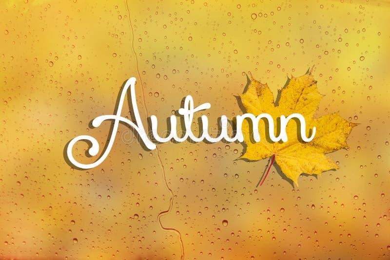 带雨点和文本的背景秋天 最后是黄秋枫叶 寒冷天气概念 库存图片
