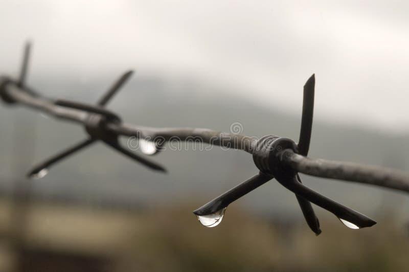 与雨水的滴的铁丝网。 免版税库存图片