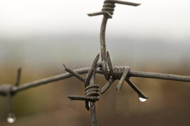 与雨水的滴的铁丝网。 库存照片