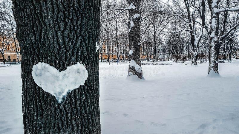 与雪的心脏的美好的冬天风景在树干,爱树的  库存照片