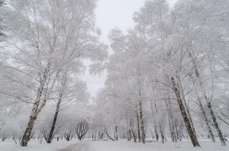 与雪的树在冬天公园 库存图片