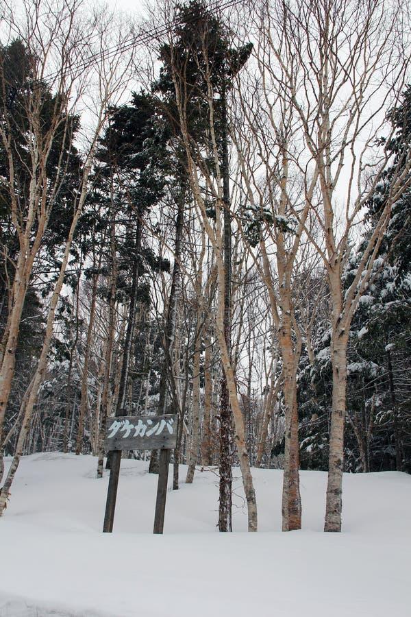 与雪的树在北海道,日本 库存图片