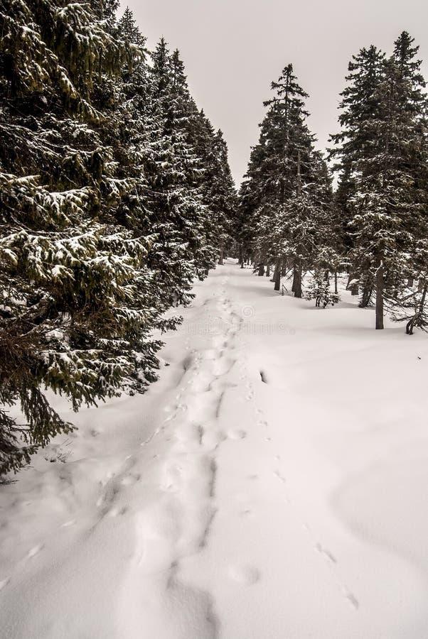 与雪靴步和树的冬天供徒步旅行的小道 库存照片