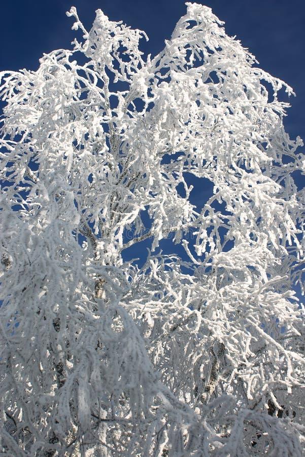 与雪#4的冬天分行 库存照片