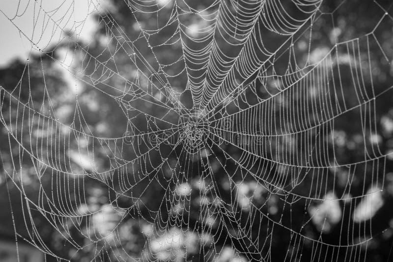 与雾水下落的Spinder网 免版税库存照片