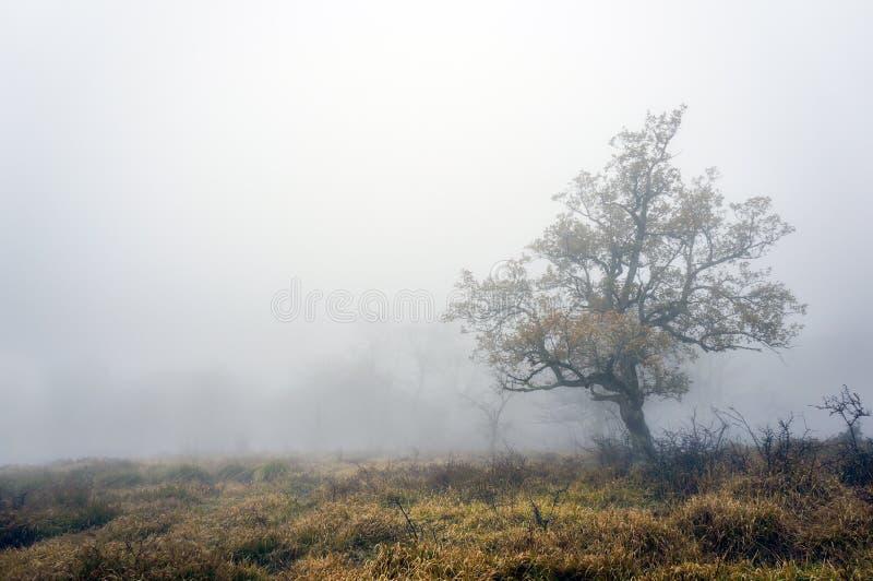 与雾的偏僻的树 免版税库存图片