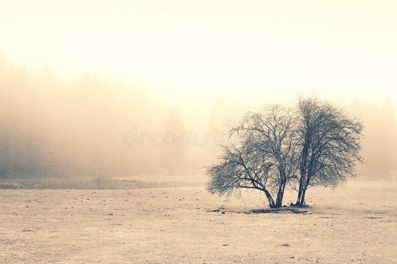 与雾的偏僻的树 图库摄影