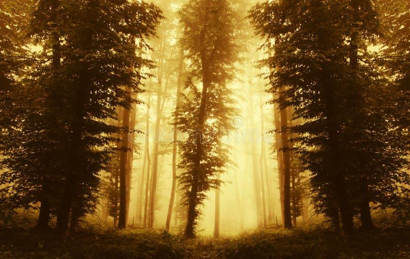 与雾的对称森林背景在日落 图库摄影