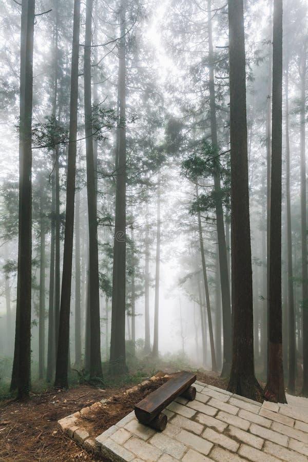 与雾的树在有木位子的森林里在石平台在阿里山国家森林度假区在冬天 库存图片