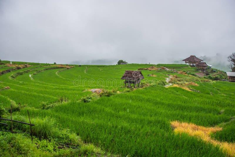 与雾的绿色米领域在清迈泰国,米调遣在 库存照片