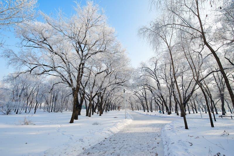 与霜和道路的树 免版税库存图片