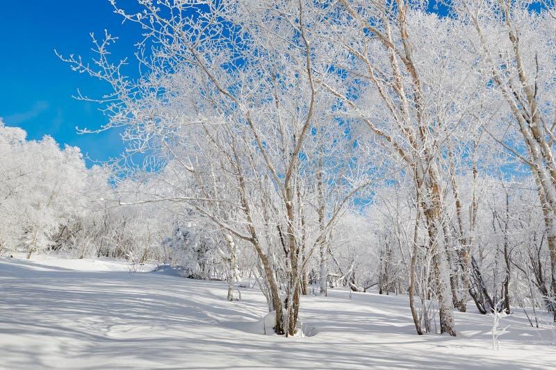 与霜的树 免版税库存图片