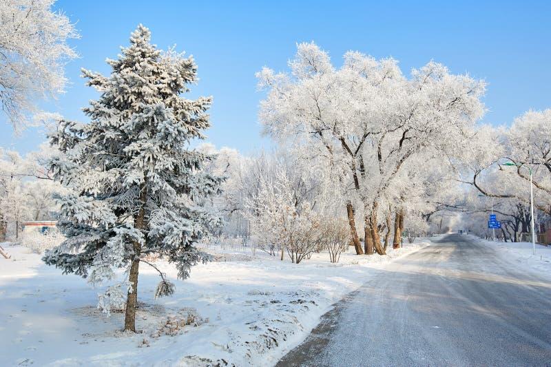 与霜的树 图库摄影