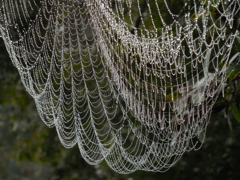 与露水的大蜘蛛网象珠宝 库存照片
