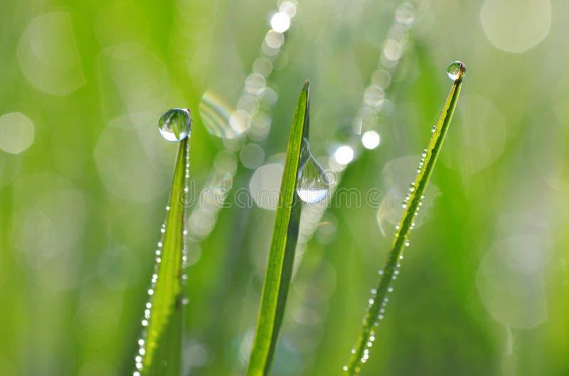 与露滴特写镜头的新鲜的绿色春天草 库存照片