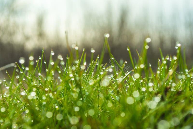 与露滴特写镜头的新鲜的绿草 库存照片