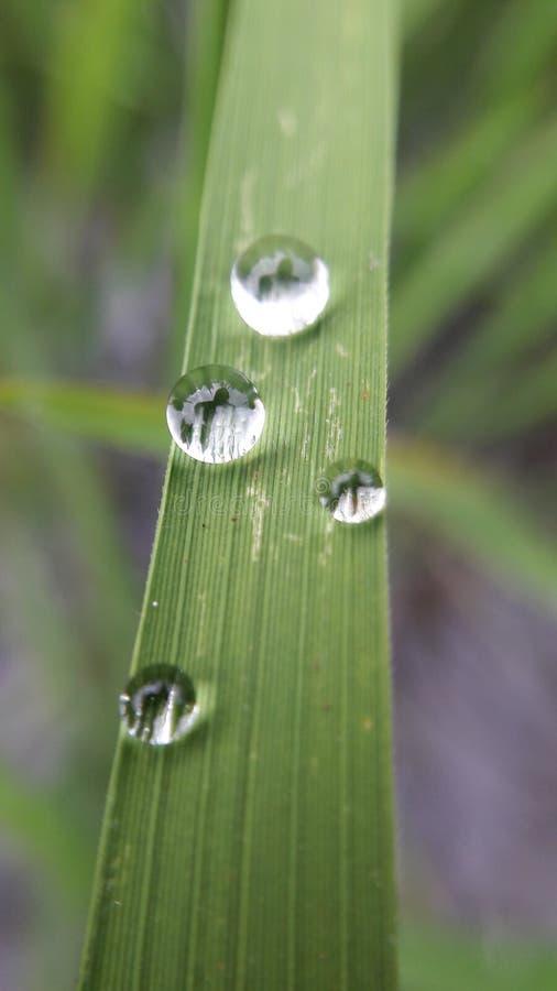 与露滴的新鲜的绿草在早晨关闭 库存照片