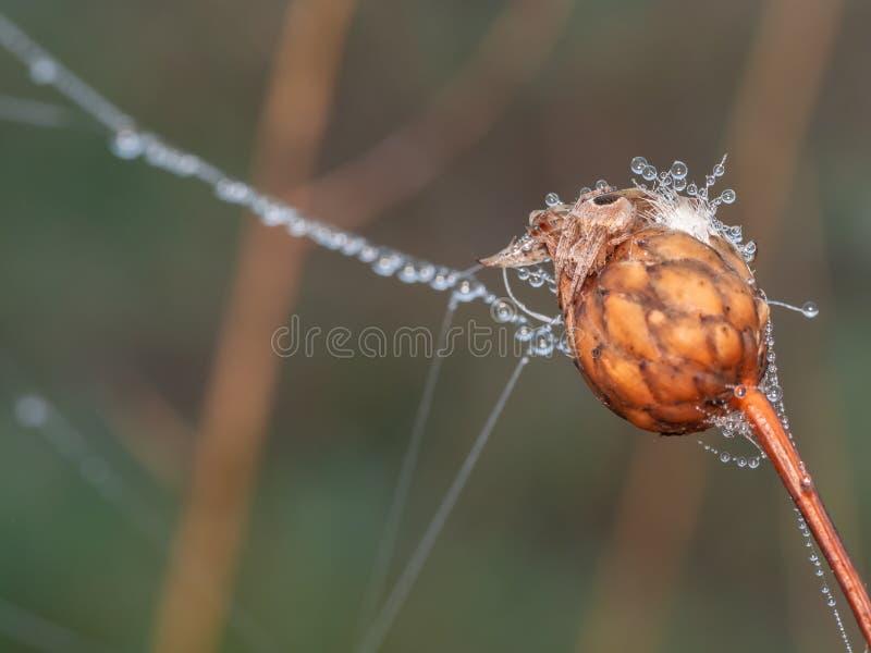与露滴的秋季场面在植物和蜘蛛网 免版税库存图片