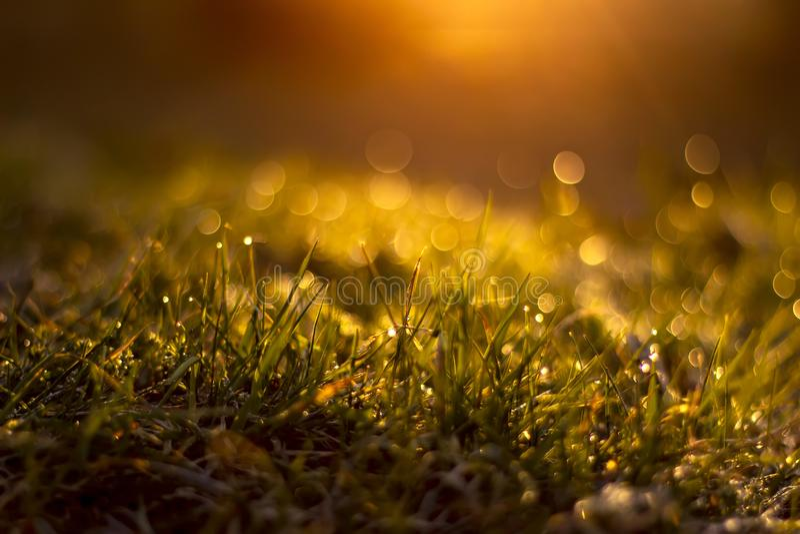 与露滴的草在日出被弄脏的背景 E 免版税图库摄影