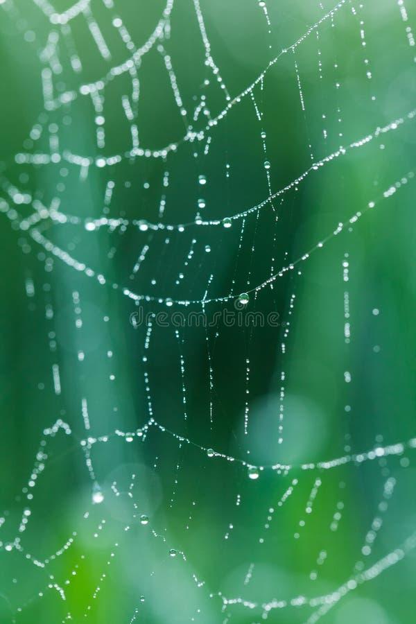 与露滴的蜘蛛网蜘蛛网在绿色森林背景的清早 免版税库存图片