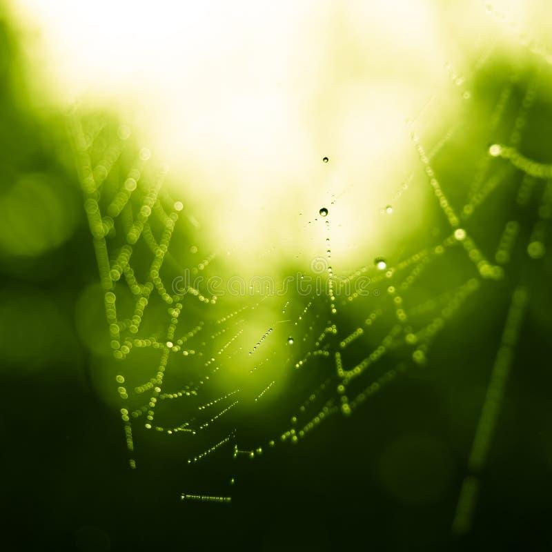 与露滴的Spiderweb在蜘蛛网照片的晴朗的早晨森林关闭  免版税库存照片
