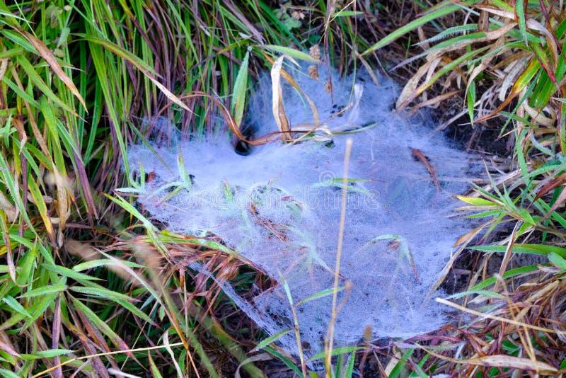 与露珠的蜘蛛网在草,乡下 图库摄影