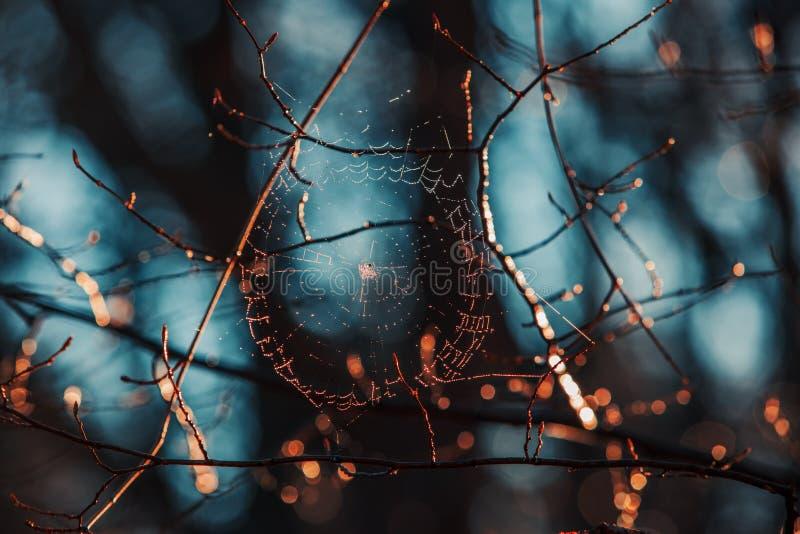 与露珠的Spiderweb在蓝色背景 库存图片