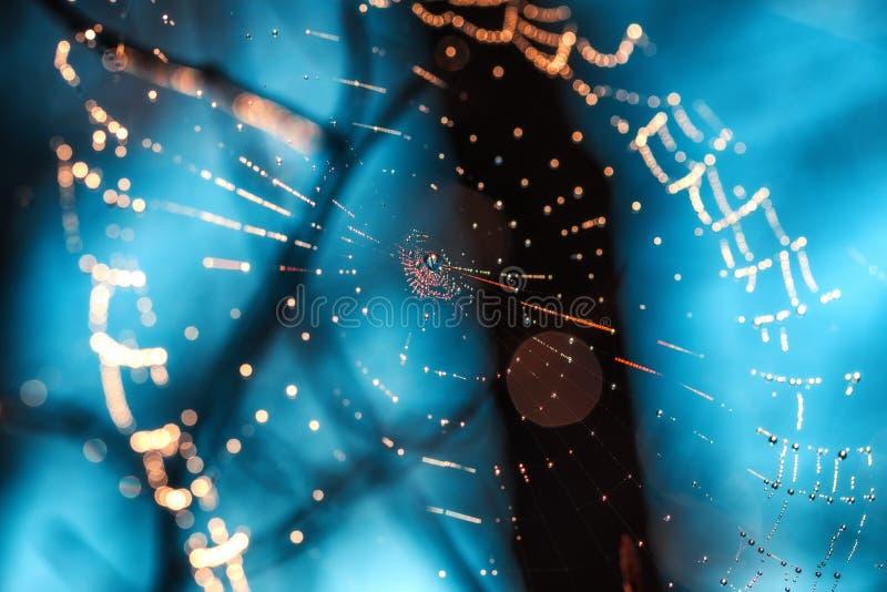 与露珠的Spiderweb在蓝色背景 免版税库存图片